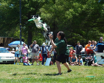 Fun Canine Entertainment in Tennessee - Team Zoom - about2