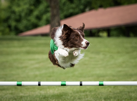 Premier Stunt Dogs Company in North Carolina - Team Zoom - fun
