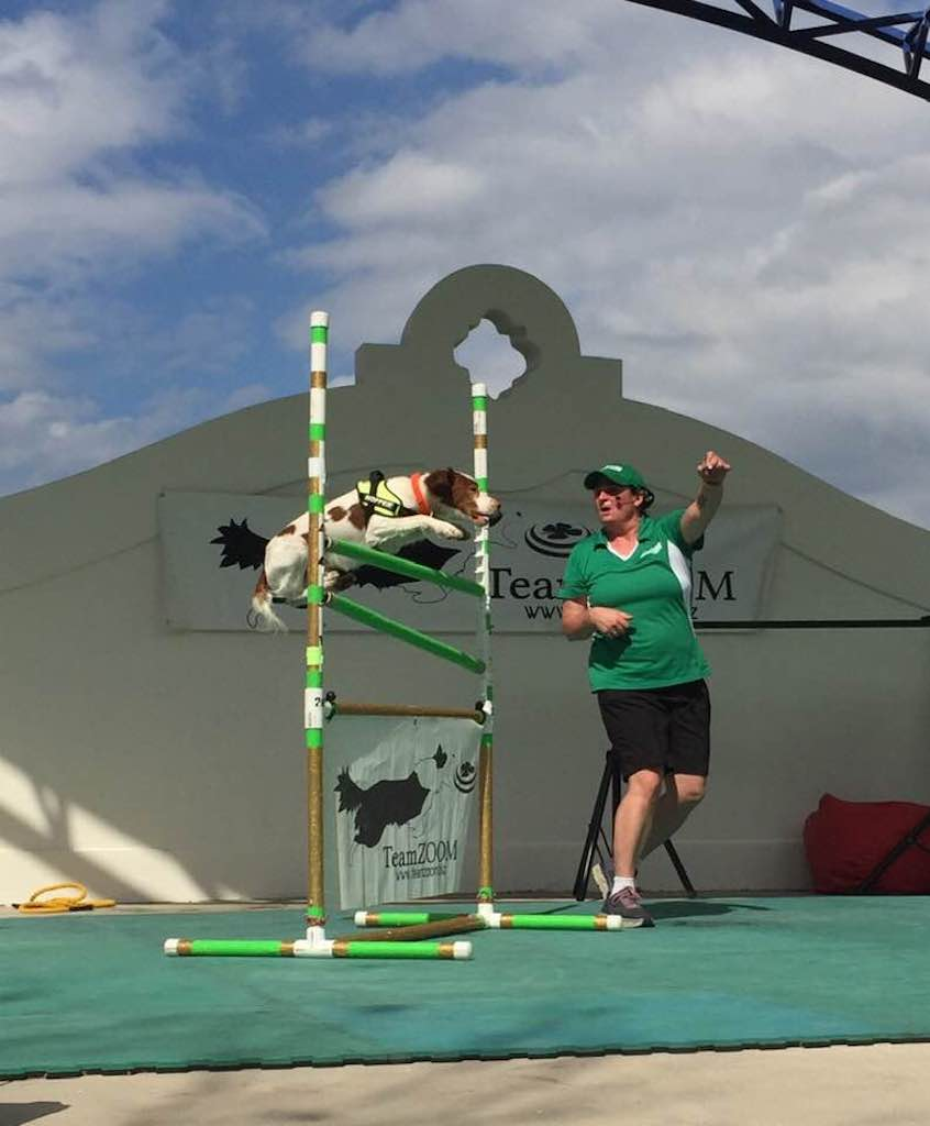 What We Do: Canine Shows & Entertainment in Ohio | Team Zoom - hopper_florida_2019(1)